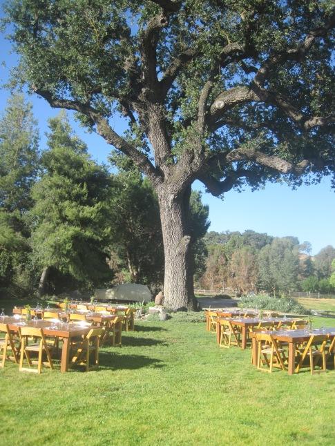 "The Big Oak tree- ""a microcosm of life itself""- Bill Spencer"